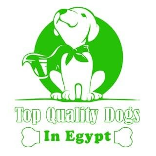Top Quality D...